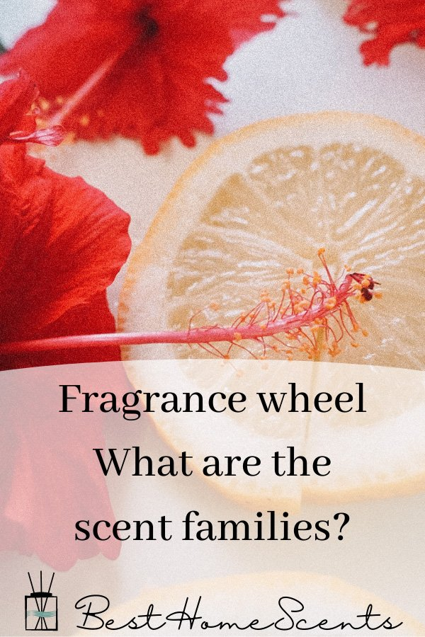 Fragrance wheel scent families pin