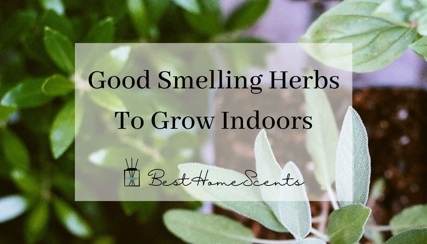 Best smelling herbs to grow indoors