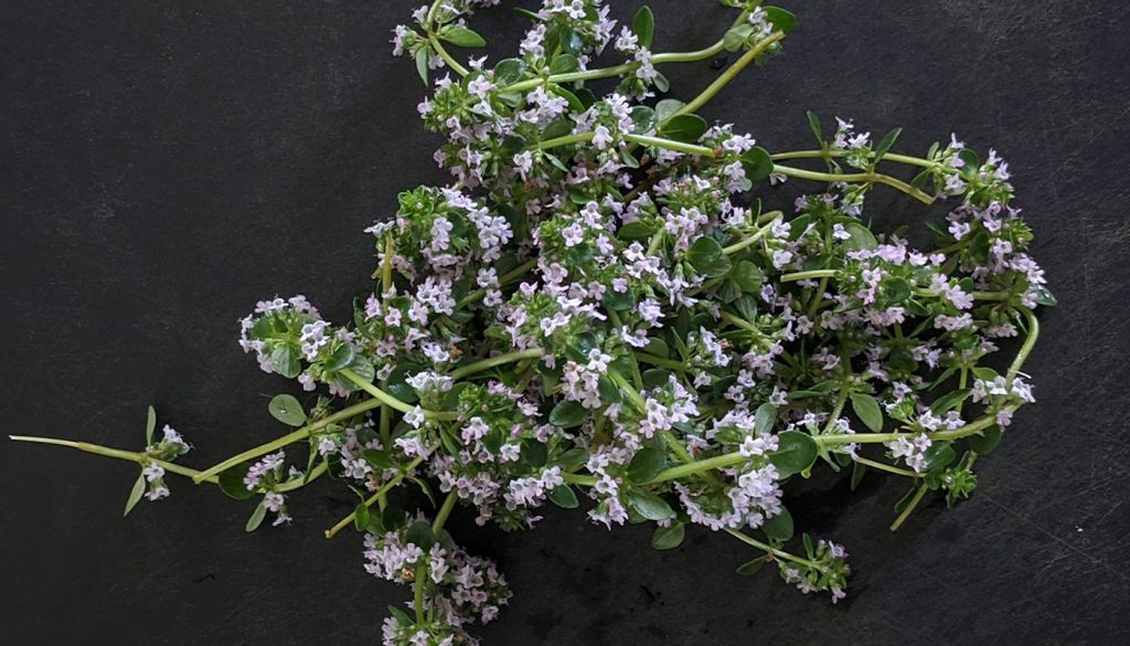 Fresh thyme with flowers